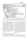 intracellular Pseudaphelidium - Page 3