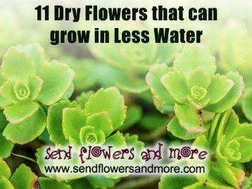 11 Dry Flowers that can grow in less water