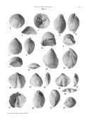 Revision of Miocene brachiopods of the Hungarian Natural History ... - Page 5