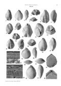 Revision of Miocene brachiopods of the Hungarian Natural History ... - Page 7