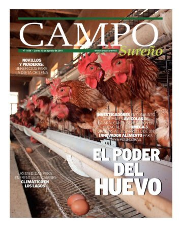 El huevo alto en omega 3 que promete revolucionar el mercado - Campo Sureño