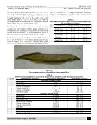 Mastacembelus malabaricus..Redescription - Page 5
