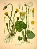 Plantas Terapêuticas - Page 4