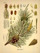 Plantas Terapêuticas - Page 6