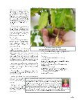 Summer 2015 | Sunshine-friendly Learning - Page 5