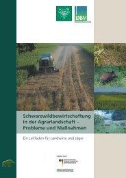 Schwarzwildbewirtschaftung in der Agrarlandschaft ... - BMELV