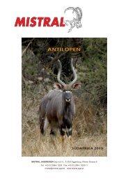 Mistral Antilopen Südafrika 2019