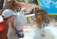Rio Safari Guide