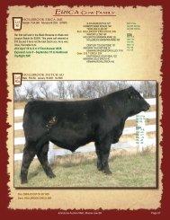 Hollbrook Errolline Cow Family - SaskLivestock