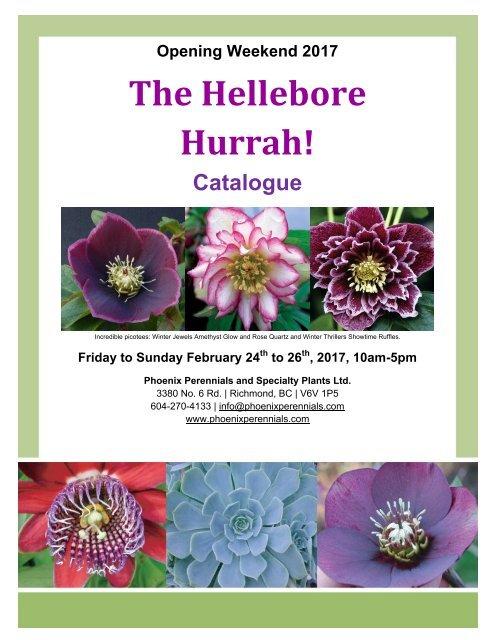The Hellebore Hurrah