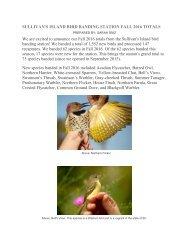 Amerikanisch papa francine groß tölpel