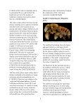 POLLINATORS Peril - Page 7