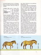 027 Was ist Was - Pferde - Seite 6