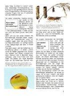 043 Was ist Was - Schmetterlinge - Seite 7