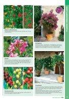 Gartenkatalog_2017 - Seite 7