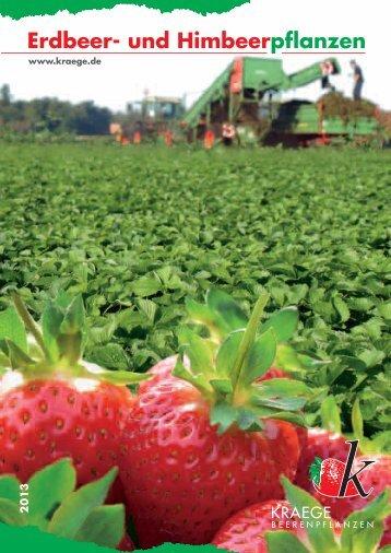 Erdbeer- und Himbeerpflanzen - Kraege.de