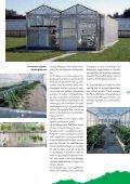 Erdbeer- und Himbeerpflanzen - Kraege.de - Seite 5