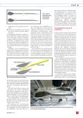 Beschleunigen nicht nur im Wildwasser - IWK - HSR - Seite 4