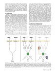 Gene Pathways to Protein-Protein Interaction Networks - Page 5