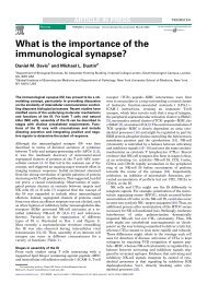 What is the importance of the immunological synapse?