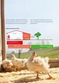Du poulet - Page 5
