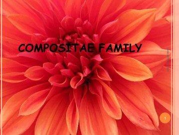 Compositae family remedies - Similima