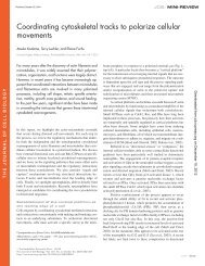 Coordinating cytoskeletal tracks to polarize cellular movements