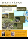 Beavers – Nature's Water Engineers - Page 2