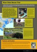 Beavers – Nature's Water Engineers - Page 3