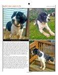 Springer - Page 6