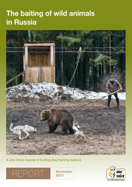The baiting of wild animals in Russia