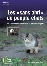 Les sans-abri du peuple chats