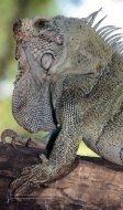 Relatório Anual - Zoológico de Brasíilia - Page 2