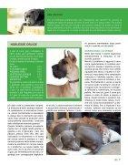 AH_02_w - Page 7