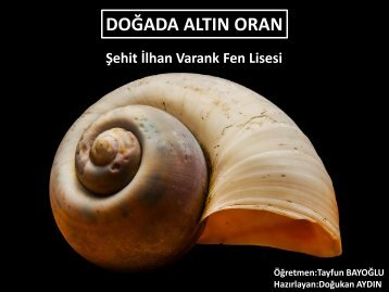 fibonacci-sayilari-ve-altin-oran_2