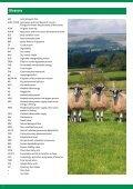 Feeding the Ewe - Page 2
