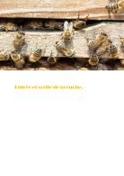 la vie de l'abeille - Page 3
