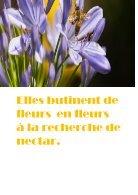 la vie de l'abeille - Page 4