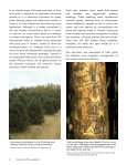 Scots Pine - Page 5