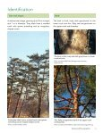 Scots Pine - Page 6