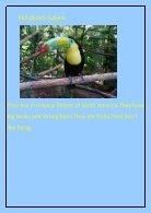 NGİLİZCE PROJE- DERGİ - Page 3