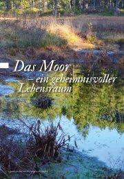 Bericht Moor - geheimnisvoller Lebensraum