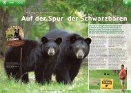 Auf der Spur der Schwarzbären TIERE - Kiknet