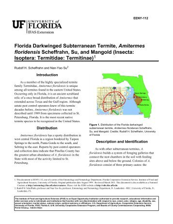 Florida Darkwinged Subterranean Termite, Amitermes floridensis ...