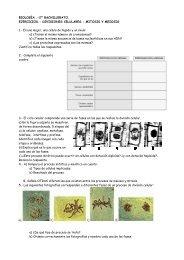 ejercicios div mitosismeiosis 12 (1)