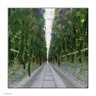Leaflet Cucumber Imea Russia - Page 2