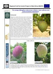 The mango (Mangifera indica) - CIRAD