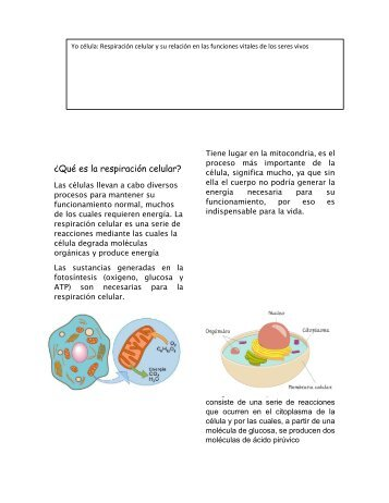 Qué es la respiración celular