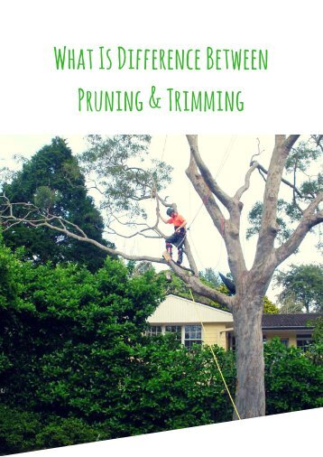 What Is Difference Between Pruning and Trimming