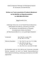 Einfluss von Tumor-assoziierten E-Cadherin ... - mediaTUM